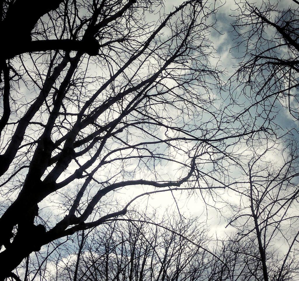trees cloudy sky Musée Rodin garden