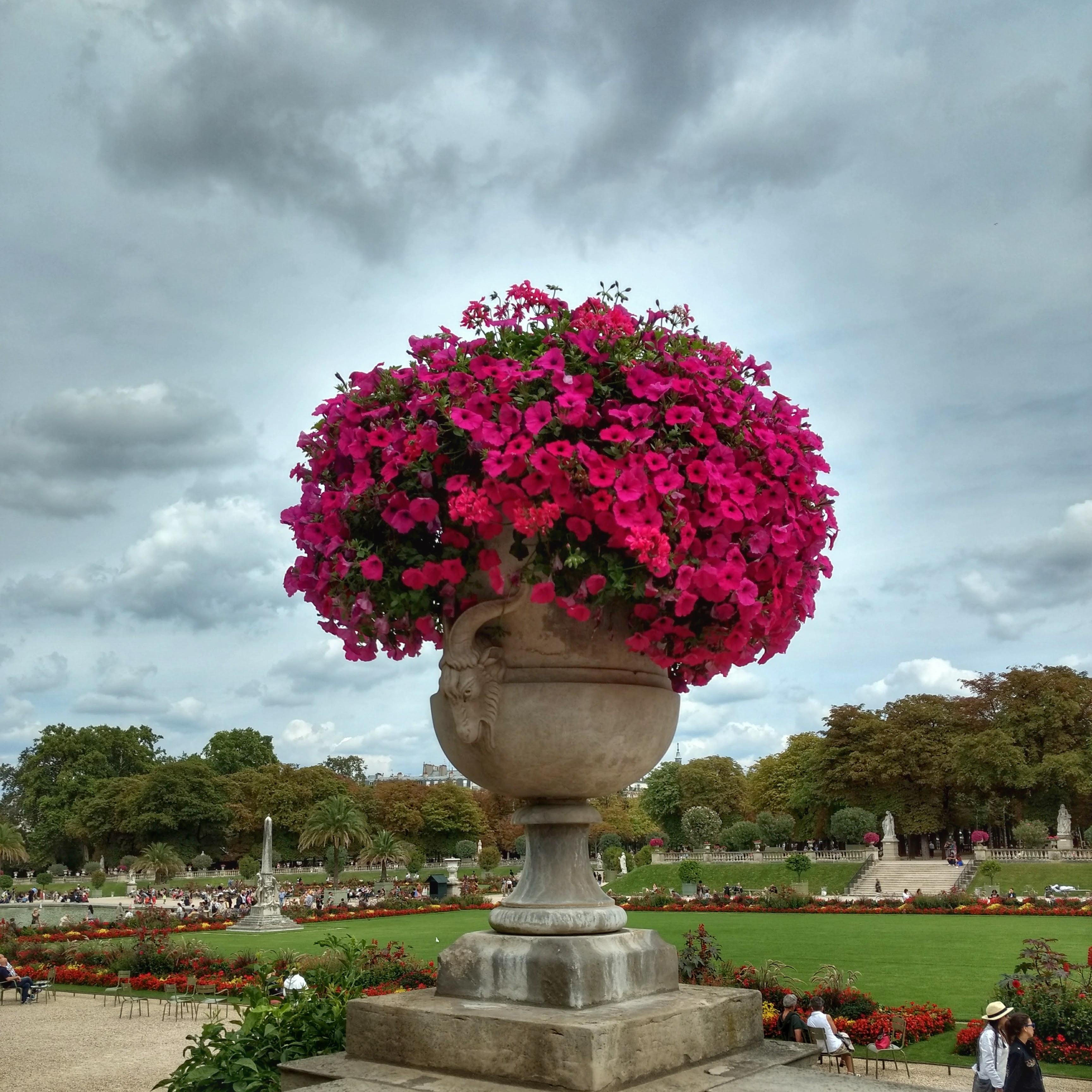 pink flowers urn park Jardin du Luxembourg