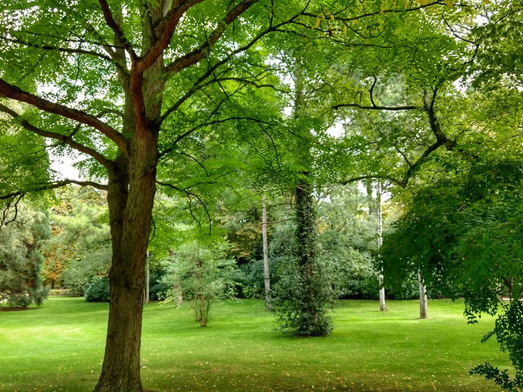 park trees grass meadow Jardin du Luxembourg