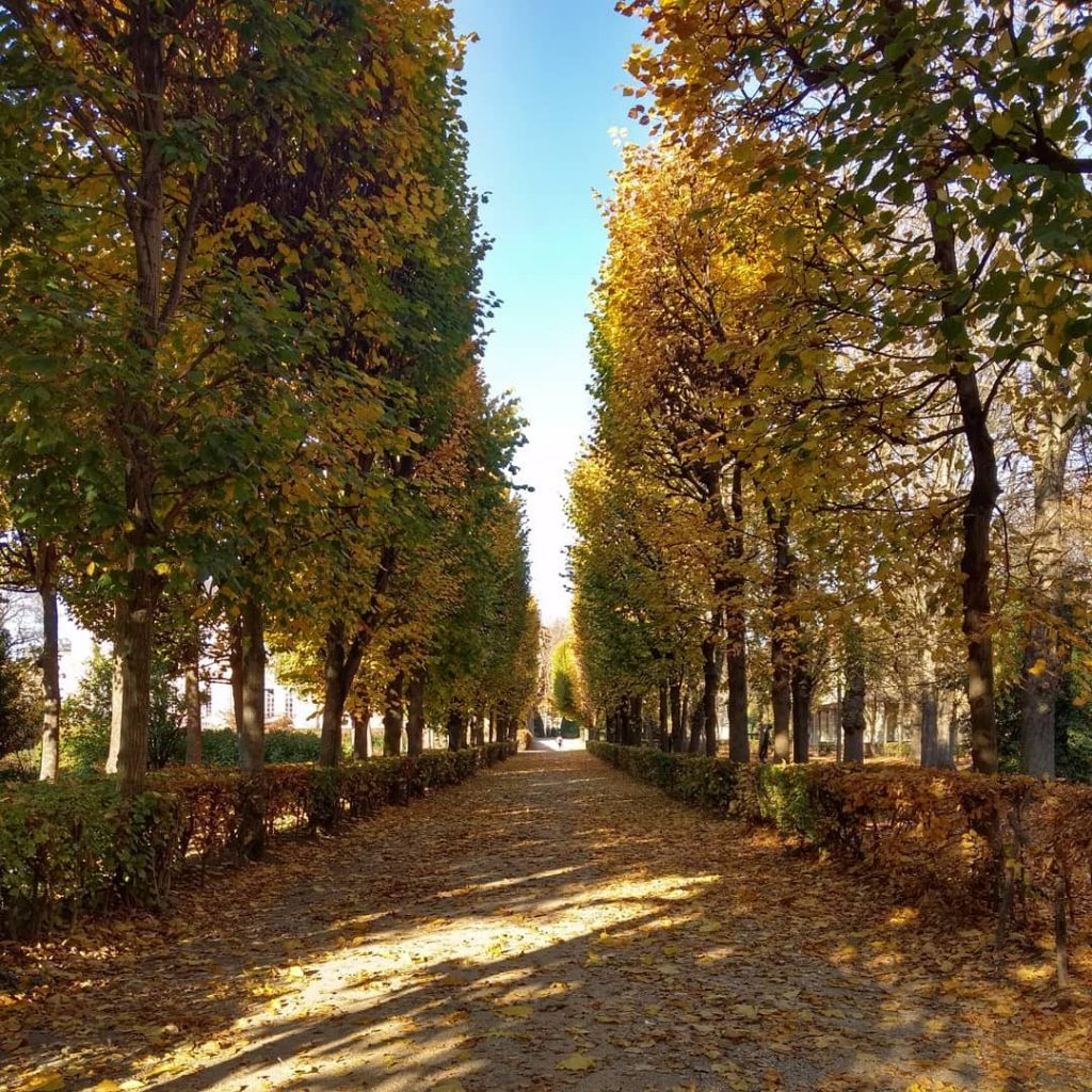 tree lined path covered in yellow leaves autumn Paris