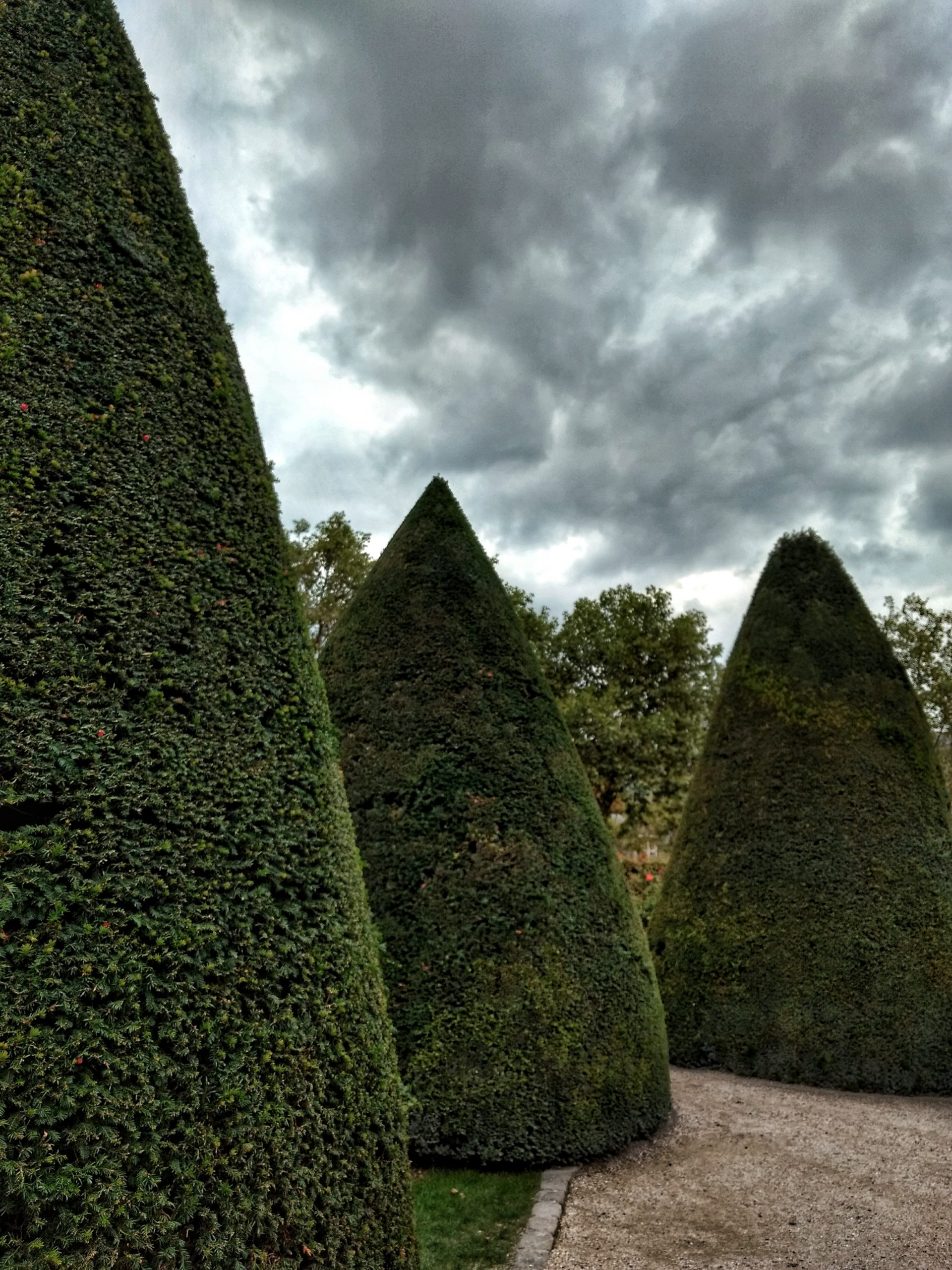 conical hedges gray clouds